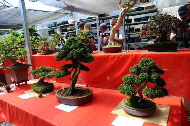 Evento reúne apaixonados por bonsais em Caxias do Sul Porthus Junior/Agencia RBS