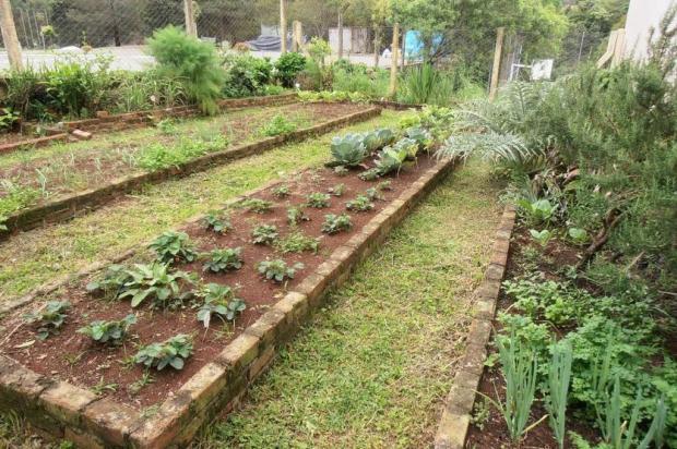 90% das escolas de Garibaldi cultivam hortas Claudia Schneider/Divulgação