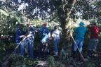 """""""Todo trabalho do ano se perdeu em cinco minutos"""", lamenta moradora de Flores da Cunha após chuva de granizo Jeferson Ageitos/RBS TV"""