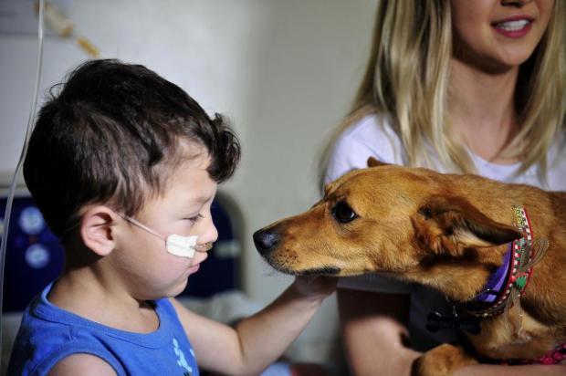ONG leva cachorros para visitar crianças internadas no Hospital Geral de Caxias Lucas Amorelli/Agencia RBS