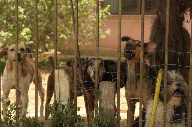 Família pede ajuda para destinar quase 30 cães mantidos por voluntária em Caxias do Sul  Lucas Amorelli/Agencia RBS