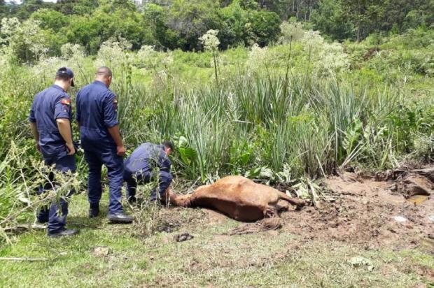 Égua é encontrada atolada e prefeitura de Caxias afirma que não há prazo para retirada do animal Eduardo Seimetz Paim / Divulgação/Divulgação