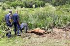 Secretaria confirma morte de égua encontrada atolada no bairro Fátima, em Caxias Jeferson Ageitos / Divulgação/Divulgação