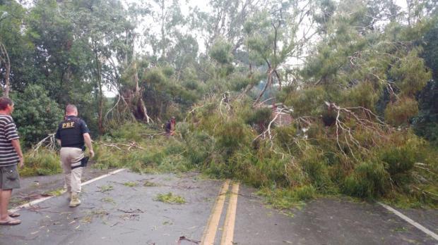 Chuva e vento fortes provocam queda de árvores sobre rodovias na Serra Divulgação / PRF/PRF