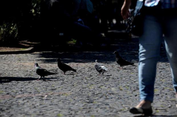 Cinco anos após prefeitura anunciar remoção de pombos, aves permanecem em grande número no centro de Caxias Lucas Amorelli/Agencia RBS