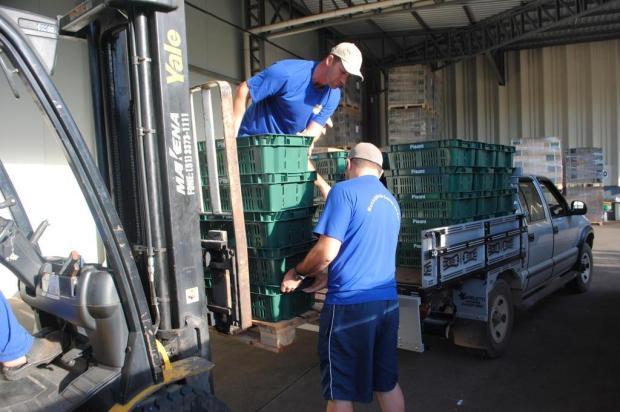 Conheça a logística feita para transportar os cachos das propriedades até a Festa da Uva Ruan Alves/Divulgação