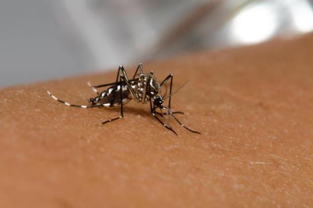 Vigilância Ambiental encontra primeiro foco de Aedes aegypti em Caxias Raquel Portugal/Fiocruz Imagens