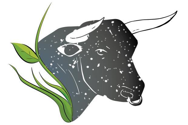 Nivaldo Pereira: na firmeza do touro Luan Zuchi/