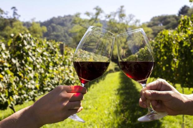 Caxias do Sul decide ficar de fora da programação oficial do Dia do Vinho Dandy Marcheti/Divulgação