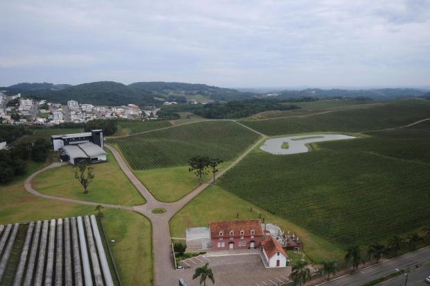 Empresa oferece pacotes que incluem sobrevoo de helicóptero e visita a vinícolas da Serra Antonio Valiente/Agencia RBS