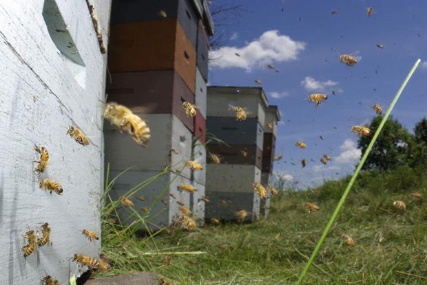 Agenda: documentário sobre desaparecimento de abelhas é atração no Ordovás, nesta quarta Vanishing of the Bees  / Reprodução/Reprodução
