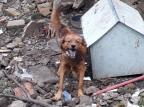 Sem água e comida, filhotes de cachorros são retirados da situação de maus-tratos em Caxias Secretaria Municipal do Meio Ambiente / Divulgação/Divulgação