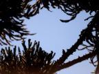 Sexta-feira será de sol e poucas nuvens na Serra Diogo Sallaberry/Agencia RBS