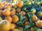Feira Ecológica de Caxias promove bate-papo e degustação de citros orgânicos neste sábado Rosa Ana Bisinella/Divulgação