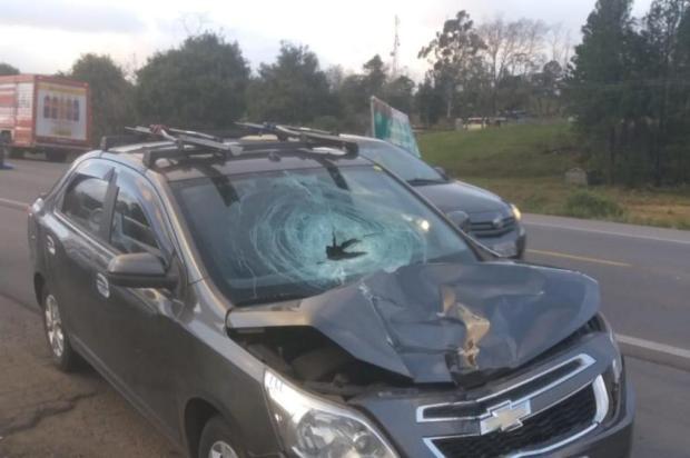 Mulher morre vítima de atropelamento na Rota do Sol Marcelo Passarella/Agência RBS
