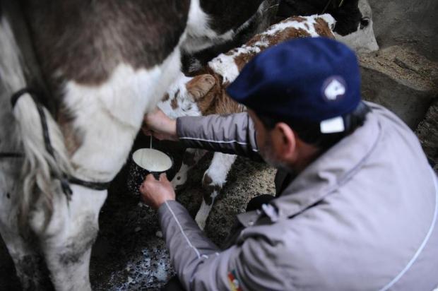 O leite não pode esperar: nem o frio de 0ºC inibe família de agricultores de São José dos Ausentes Antonio Valiente/Agencia RBS