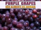 Não Alimente os Animais mostra single novo no sábado, em Caxias Rayza Roveda/Divulgação