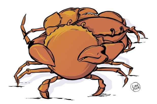 Nivaldo Pereira: o abraço do caranguejo Luan Zuchi/