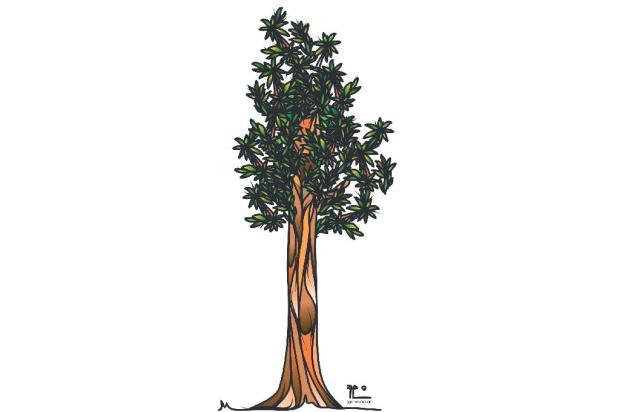 Tríssia Ordovás Sartori: seja árvore Fábio Panone Lopes/
