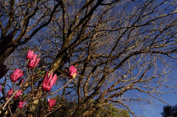 Inverno colore a paisagem em Caxias do Sul Marcelo Casagrande/Agencia RBS