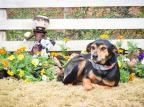 Festival de Massas no dia 25 ajuda animais de ONG em Caxias Linda Tomasi / Divulgação/Divulgação