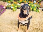 ONGs de Caxias do Sul criam campanhas online para ajudar animais abandonados Linda Tomasi / Divulgação/Divulgação
