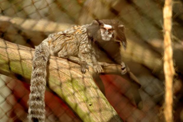 Universidade de Caxias do Sul fechará zoológico em dias de passe livre Diogo Sallaberry/Agencia RBS