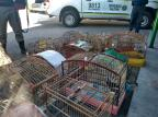 Prefeitura e Brigada apreendem 29 pássaros silvestres mantidos em cativeiro em Caxias Divulgação / Prefeitura Caxias do Sul/Prefeitura Caxias do Sul