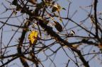 Tempo firme e sol devem permanecer na Serra nesta terça-feira (Antonio Valiente/Agencia RBS)