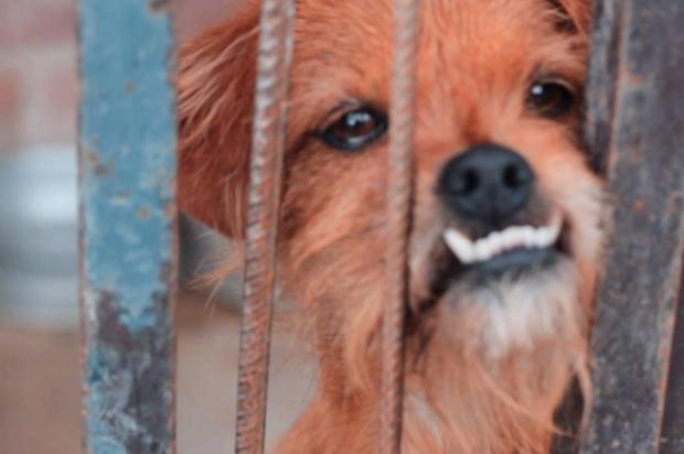 Com histórias e fotos de cães abandonados, campanha quer incentivar adoções em Caxias Arquivo Pessoal/Divulgação