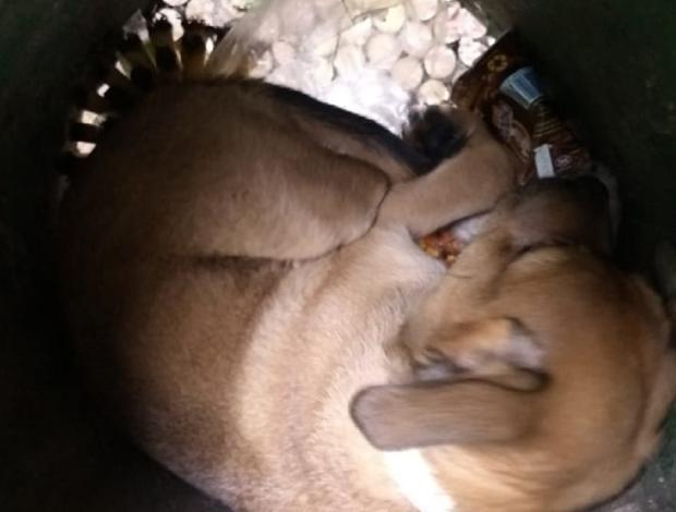 Cão é abandonado em lixeira da Praça Dante Alighieri , em Caxias do Sul Prefeitura de Caxias do Sul / Divulgação/Divulgação