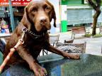 Polícia Civil vai investigar circunstâncias que levaram vigilante a atirar em cadela em Bento Gonçalves Arquivo pessoal / divulgação/divulgação