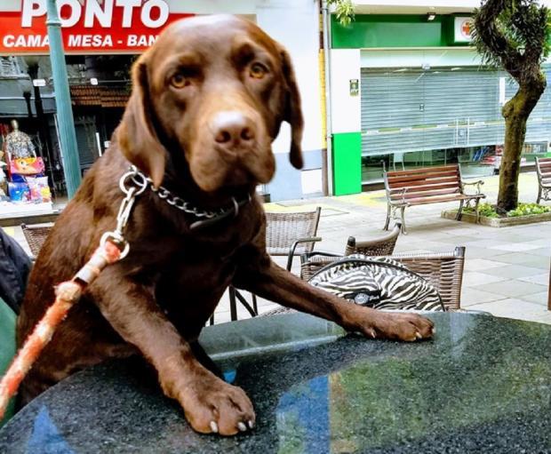 Cadela é baleada na pata durante passeio no campus da UCS em Bento Gonçalves Arquivo pessoal / divulgação/divulgação
