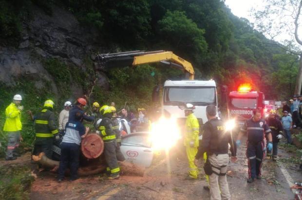 Duas pessoas ficam feridas após árvore cair sobre carro na BR-116 em Caxias PRF/Divulgação