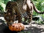 Dia das Bruxas até para eles: conheça as atividades alusivas à data para animais do GramadoZoo Susanna Orri Grato / Divulgação/Divulgação