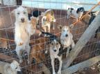 ONG denuncia prefeitura de Nova Bassano por descaso com animais do canil ASPA/Divulgação