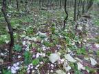 Cinco minutos de granizo prejudicam plantações de uva em Coronel Pilar e Boa Vista do Sul Divulgação / Sindicato dos Trabalhadores Rurais/Sindicato dos Trabalhadores Rurais