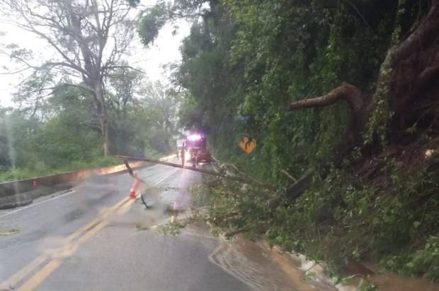 Árvore cai e atinge carro na BR-116, em Nova Petrópolis PRF / Divulgação/Divulgação