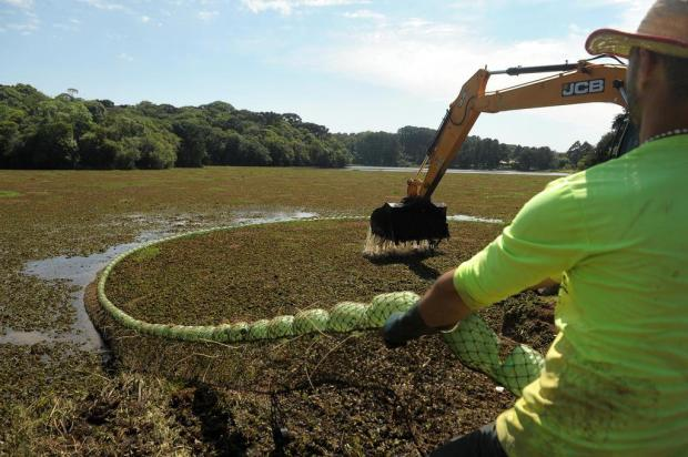 Lago da Represa São Pedro está repleto de plantas aquáticas em Caxias Lucas Amorelli/Agencia RBS