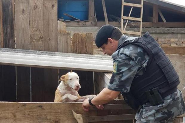 Homens são presos e cães em situação de maus-tratos recolhidos em Caxias Brigada Militar/Divulgação