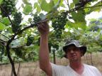 Safra de frutas na Serra deve render 70 mil toneladas a menos Marcelo Casagrande/Agencia RBS