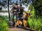 Morre cão policial da Brigada Militar de Caxias Everton Ubal/Brigada Militar