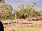Migração de animais silvestres chama a atenção em Caxias do Sul GM Ambiental / divulgação/divulgação