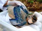 VÍDEO: após 26 dias de incubação, filhote de arara ameaçada de extinção nasce no Gramadozoo Halder Ramos / Divulgação/Divulgação