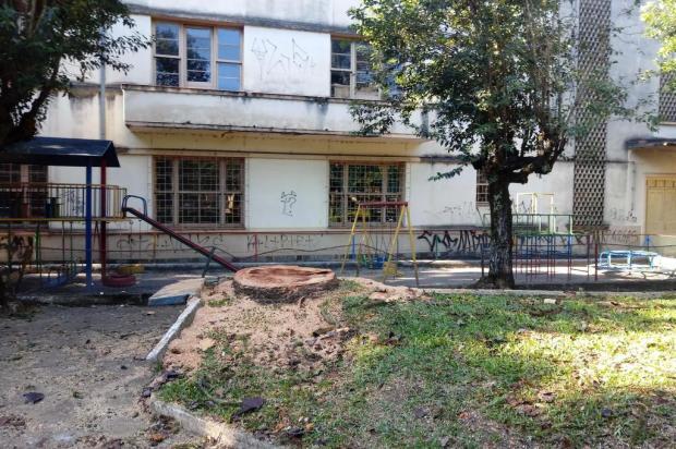 Moradores questionam corte de araucárias na praça de Galópolis em Caxias Aline Ecker/Agência RBS