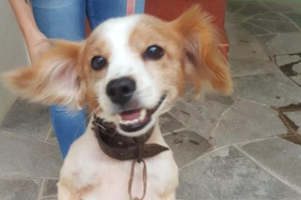 Voluntários promovem mutirão para ajudar idosa de 80 anos que cuida de cães e gatos em Caxias Wagner Berna Medeiros de Azevedo/Divulgação