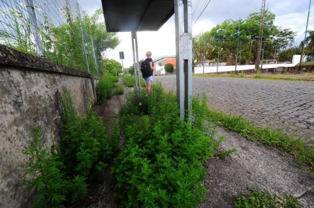 Força-tarefa mira excesso de mato em 10 bairros de Caxias do Sul Porthus Junior/Agencia RBS