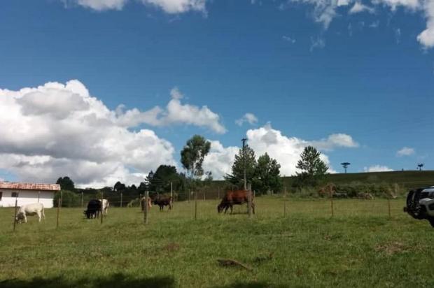 Nove cabeças de gado são apreendidas em área de bacia de captação de Caxias do Sul Patrulhamento Ambiental/ Samae/Divulgação