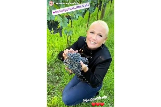 """""""Para mim, isso aqui é a Disneylândia"""", diz Xuxa colhendo uvas em Bento Gonçalves Reprodução/"""