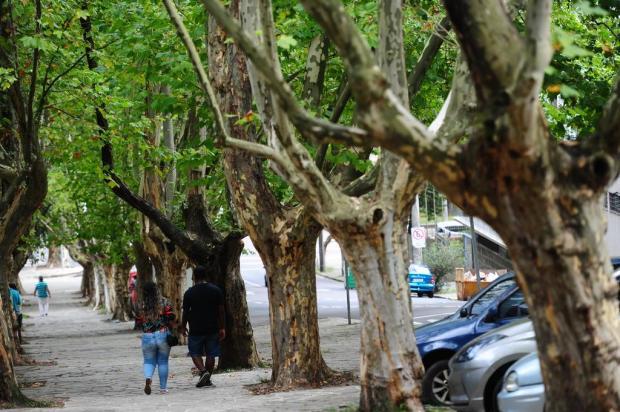 A origem do túnel de plátanos do Parque dos Macaquinhos Porthus Junior/Agencia RBS